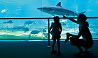 Shark education in Dubai