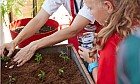 Victory Heights Primary School garden profiled