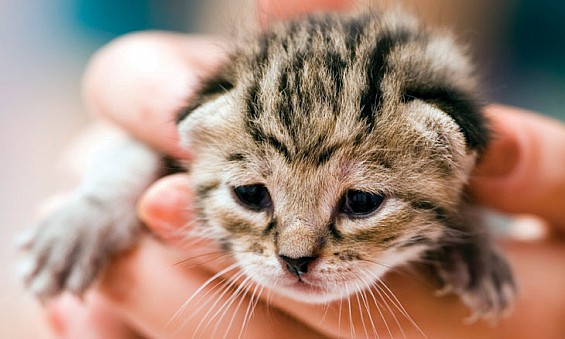Three pet care tips for new pet owners