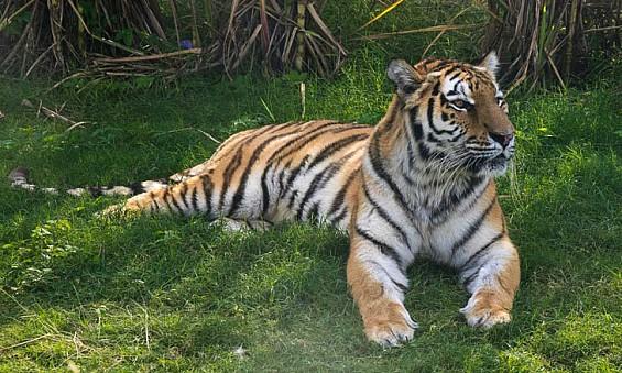 Top five reasons to visit Dubai Safari