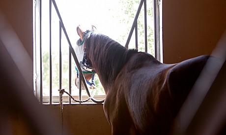 2014_horse