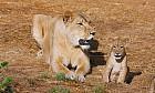 Al Ain Wildlife Park visit