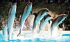 Legend of the Mermaid at Dubai Dolphinarium