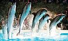 Legend of the Mermaid at Dubai Dolphinarium