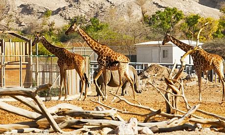 2013_zoo_1