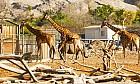 Play here: Al Ain Zoo