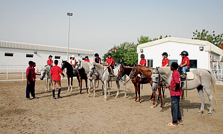 horse82811_1
