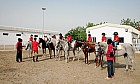 Horse riding in Dubai