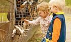 Petting zoo in Dubai