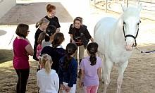 Hoofbeatz equestrian centre