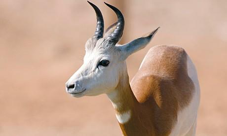 deer11612_1
