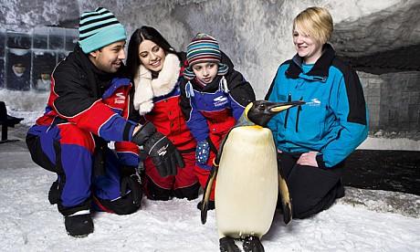 2014_penguins