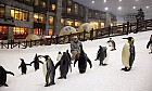 Penguin research at Ski Dubai