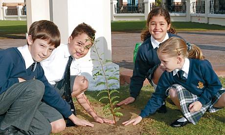 plant22711_1
