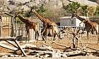 Wild times at Al Ain Zoo