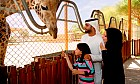 Al Ain Zoo Image