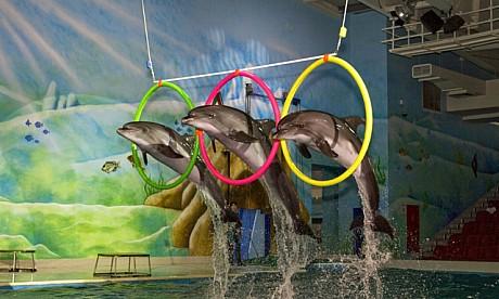 2013_1_dolphinarium