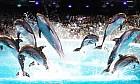 Dubai Dolphinarium Image