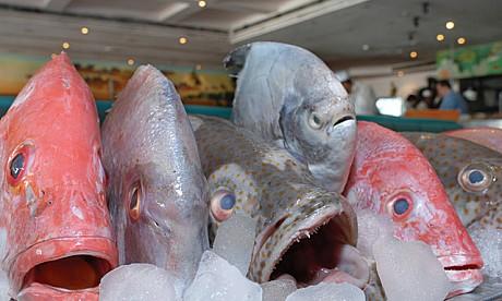 fishbasket_2